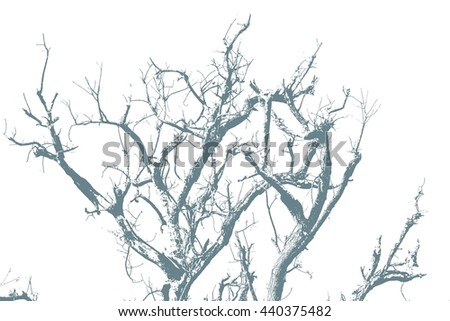 Branches of trees - stock photo