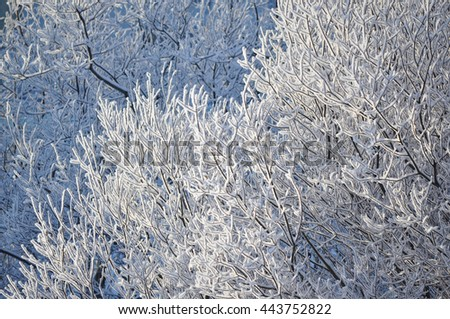Branches of trees covered with frost