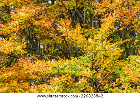 Branches of trees with autumn leaves - stock photo