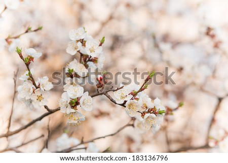 Branches of trees with white blossoms outdoor
