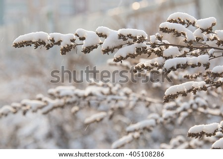 branches of wormwood in the snow outside