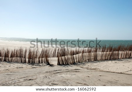 branches on the beach to hold the sand