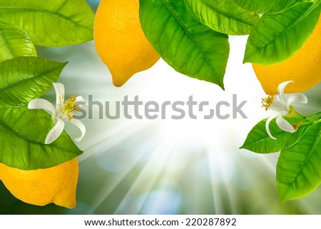 branches with lemons on a green background - stock photo