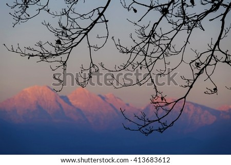 Branches with mountains