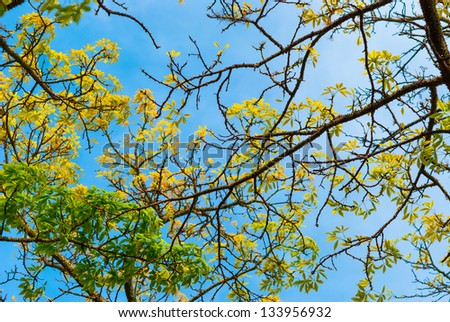 Branches with thorns of chorisia tree - stock photo