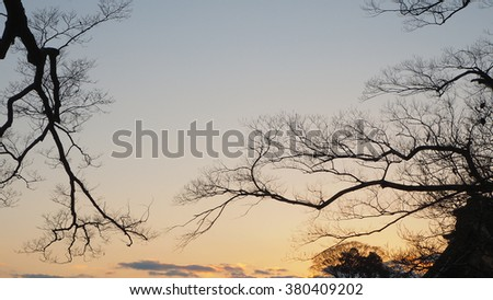 Branching silhouette in the sunset