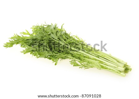 Brassica juncea on the white background