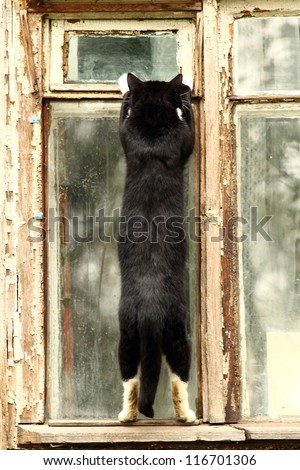 brazen cat steals food through the window, the robber apartments, cat thief - stock photo