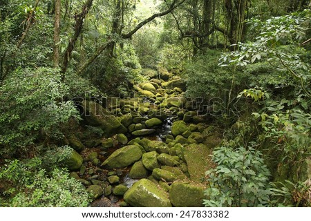 Brazil - jungle view in Mata Atlantica (Atlantic Rainforest ecosystem) in Serra dos Orgaos National Park (Rio de Janeiro state). - stock photo