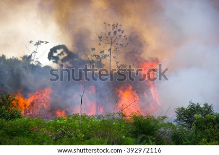 Brazilian Amazon Forest burning to open space for pasture - stock photo