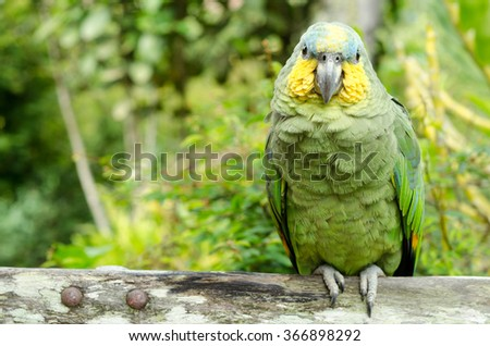 Brazilian parrot - stock photo