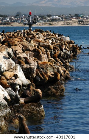 Breakwater in Monterey with Sea Lions