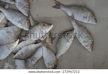 bream on display at fish market