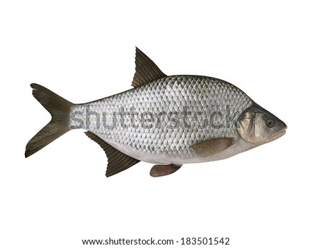 Bream, side view. Isolated on the white background