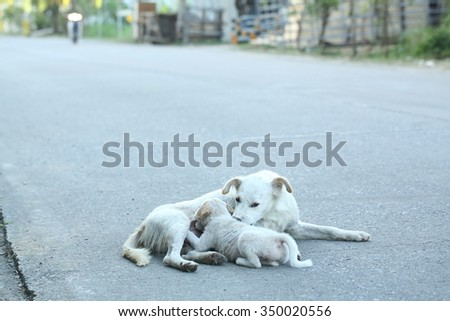 breast feeding  dog with pups - stock photo