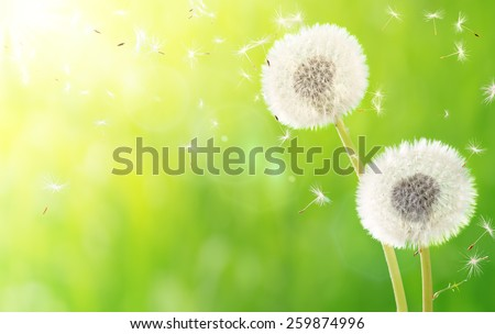 breath of spring - new life and allergy  - stock photo