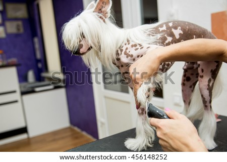 Breed Dog Grooming Chinese Crested