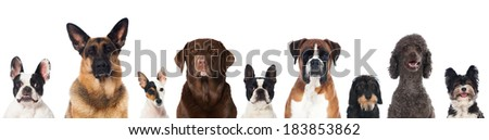 Breed dogs - stock photo