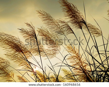 Breeze swaying the grass with sunset sky background - stock photo