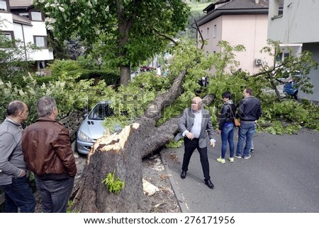 BRESSANONE BRIXEN, ITALY - MAY 6, 2015 : Large, old tree falls in the street blocking traffic and destroying a parked car, also injuring some people and pedestrians on May 6, 2015