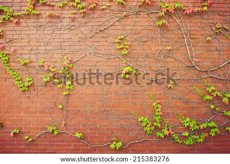 Brick wall background with autumn leaves - stock photo