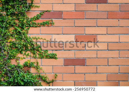 brick wall texture with plants as background image