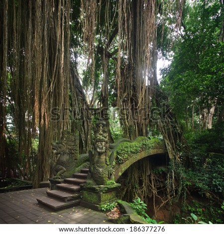 Bridge in Ubud's Monkey Forest Sanctuary with huge old tree with log roots and branches, Bali, Indonesia  - stock photo