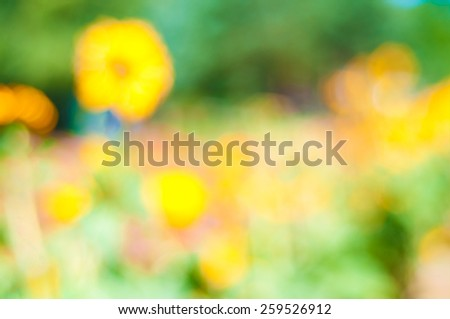 Bright and Cheerful Sunflower and Zinnia Field in Portland, Oregon Blowing in Wind on a Sunny Day, Blurred for a Colorful Abstract Background.  Horizontal - stock photo
