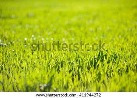 bright and fresh green grass at spring - stock photo