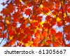 bright autumn leaves in the natural environment - stock photo