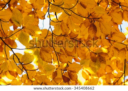 Bright autumn leaves in the natural environment. Fall trees, yellow nature background - stock photo