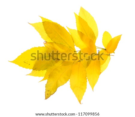 bright autumn leaves, isolated on white