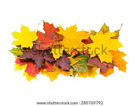 Bright autumn maple leaves on a white background - stock photo