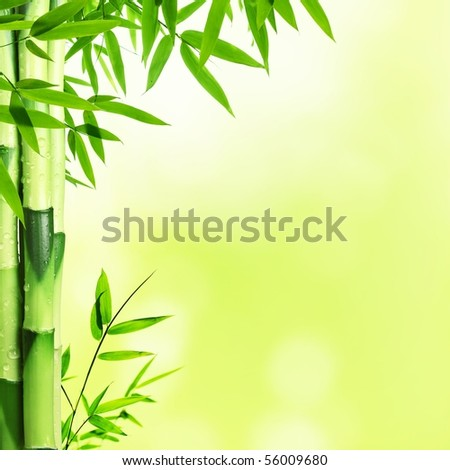 Bright Bamboo background with copy space - stock photo
