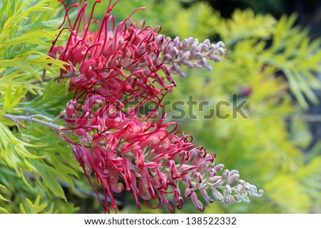 Robyn stock images royalty free images vectors shutterstock - Flowers that bloom all year round ...