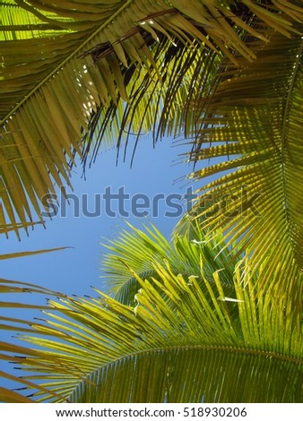 Bright blue sky through the green leaves of palm trees