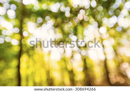 Bright blurred bamboo forest abstract background at sunset - stock photo