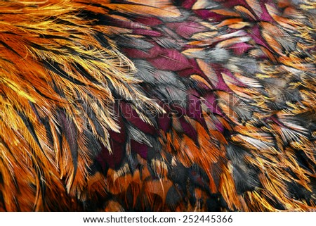 Bright brown feather group of some bird - stock photo