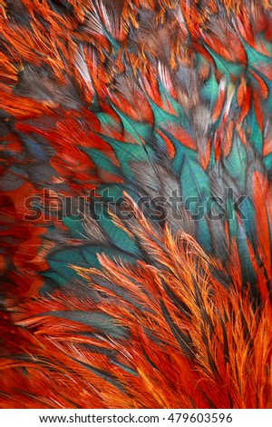 Bright brown feathers of bird
