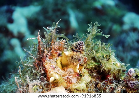 Bright Christmas Tree Worms on Coral - stock photo