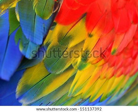 Bright color of Scarlet Macaw feathers, bird of colorful - stock photo
