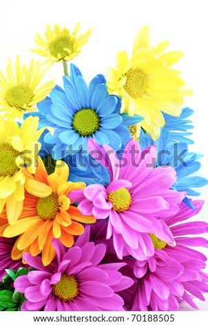 Bright colored Daisies on a white vertical background with copy space - stock photo