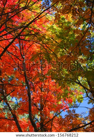 bright colored leaves on the branches - stock photo