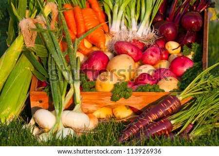 bright colorful display of various assorted fresh vegetables from the garden - stock photo
