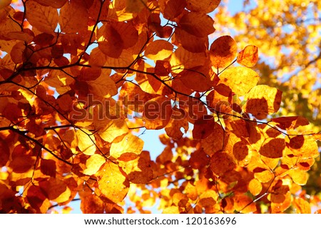 Bright colorful leaves on the branches in the autumn forest.