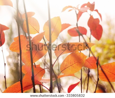 Bright colorful leaves on the branches in the autumn forest - stock photo