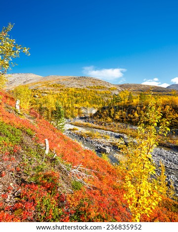 Bright colors of autumn foliage in Mannepahk valley, Hibiny mountains above the Arctic Circle, Russia