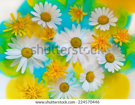 Bright colourful background with flowers of camomile and dandelion in water color paints. - stock photo