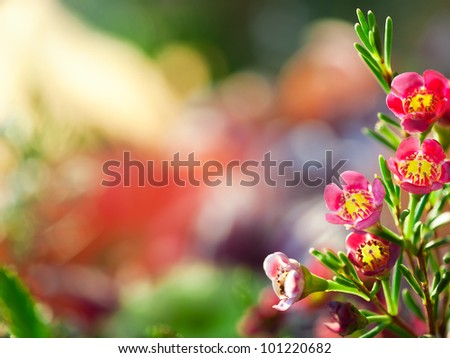 Bright floral background,  pink flowers (alyssum). - stock photo