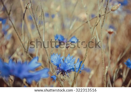 Bright floral background with bee and blue wild cornflower - stock photo
